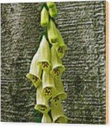 Yellow Foxglove Flowers Wood Print