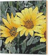 Yellow Gazanias Wood Print