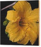 Yellow Glory Wood Print