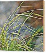 Yellow Grass Wood Print
