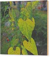 Yellow Heart Leaves IIi Photoart Wood Print