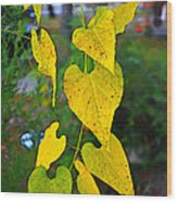 Yellow Heart Leaves  Photoart I Wood Print
