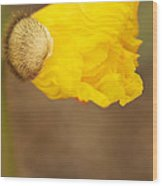 Yellow Icelandic Wood Print