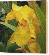 Yellow Iris Tasmania Australia Wood Print
