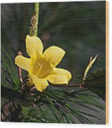 Yellow Jessamine Wood Print
