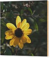 Yellow Jewel Wood Print