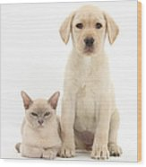 Yellow Lab And Burmese Cat Wood Print