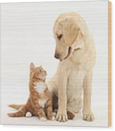 Yellow Lab And Ginger Kitten Wood Print