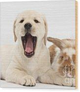 Yellow Lab Puppy With Rabbit Wood Print