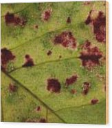 Yellow Leaf With Red Spots 2 Wood Print