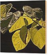 Yellow Leaves On A Tree Branch Wood Print