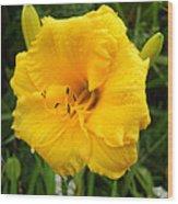 Yellow Lily - Oshun Wood Print