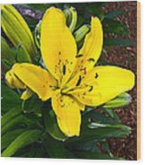 Yellow Lily Beauty Wood Print