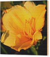Yellow Lily2 Wood Print
