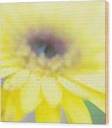 Yellow Margarita Daisy Wood Print