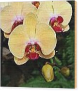 Yellow Moth Orchids Wood Print