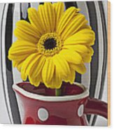 Yellow Mum In Pitcher  Wood Print