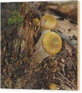 Yellow Mushrooms Wood Print