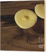 Yellow Mushrooms2 Wood Print