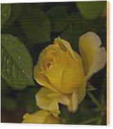 Yellow N Leaf Wood Print