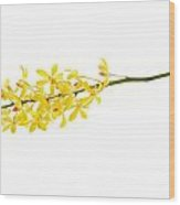 Yellow Orchid Bunch Wood Print