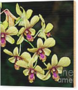 Yellow Orchid Cascade Wood Print