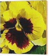 Yellow Pansey Wood Print