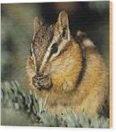 Yellow Pine Chipmunk, Kananaskis Wood Print