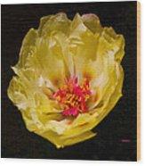 Yellow Portulaca Wood Print by Mitch Shindelbower