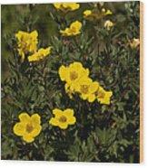 Yellow Potentilla Or Cinquefoils  Wood Print