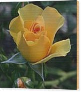 Yellow Queen Wood Print by Valia Bradshaw