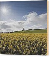 Yellow Rapeseed Field, Newgrange Wood Print