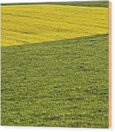 Yellow Rapeseed Growing Amongst Green Wood Print