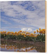 Yellow Reflections Of Tulips Wood Print