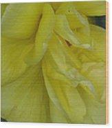 Yellow Rose 02 Wood Print