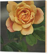 Yellow Rose Of Baden Wood Print