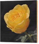 Yellow Rose On Black Background Wood Print by Déco'Style Balexia87