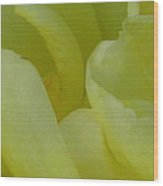 Yellow Rose Petals  Wood Print