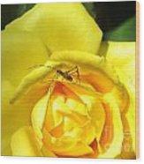 Yellow Rose Visitor Wood Print