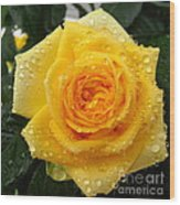 Yellow Rose With Water Droplets Wood Print