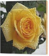 Yellow Roses With Water Droplets Wood Print
