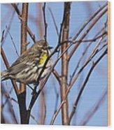 Yellow-rumped Warbler - Placid Wood Print