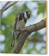 Yellow Rumped Warbler Looking Down Wood Print