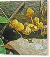 Yellow Sandpaper Mushrooms Wood Print