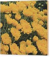 Yellow Sea Of Flowers Wood Print