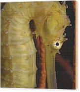 Yellow Seahorse, Batam, Riau, Indonesia Wood Print