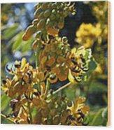 Yellow Senna Wood Print