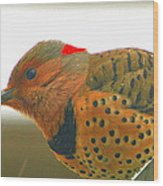 Yellow Shafted Flicker Wood Print