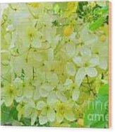Yellow Shower Tree - 5 Wood Print