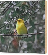 Yellow Songbird Wood Print